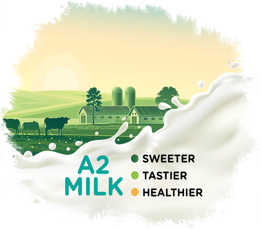 a2-milk-4